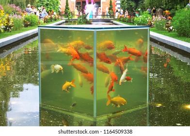 cube fish aquarium