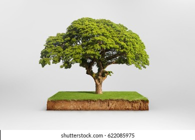 cubical cross section with underground earth soil and green grass on top, cutaway terrain surface with mud and tree isolated