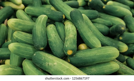 cucumber songkhla thailand