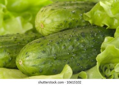 cucumber,lettuce
