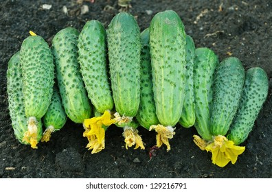 cucumbers in bulk laying on the ground