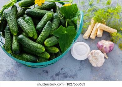 concombres à l'aneth et à l'ail à raifort - fruits et légumes
