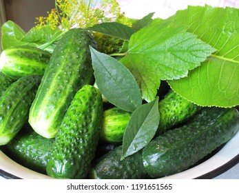 Cucumbers for pickling. Cucumbers and spices - everything for pickling, set