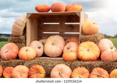 Cucurbita maxima, pumpkins on straw bale and wooden box, rural farm landscape