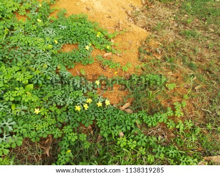 Cucurbitaceae Long Vine Yellow Flowers Stock Photo Edit Now