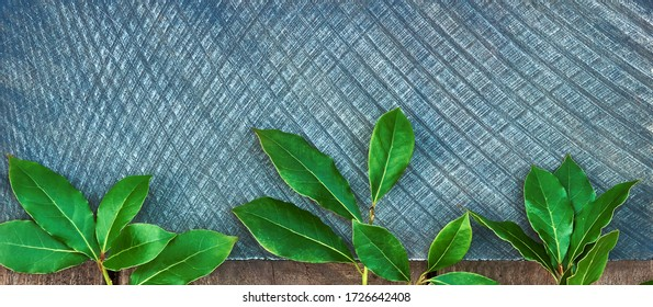 Culinary background wooden and blue recipe with bunches of sheets of fresh green juicy laurel, place for text