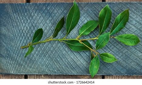 Culinary background wooden and blue recipe with bunches of sheets of fresh green juicy laurel