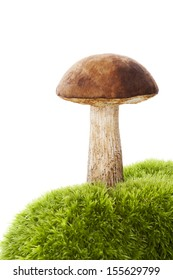 Culinary mushroom on green moss isolated on white background. Culinary boletus eating.