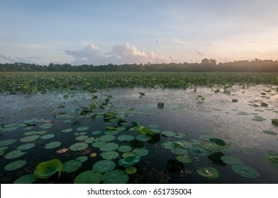 Cullinan Park, Sugarland, Texas near Houston. A hot and humid summer morning in a southern park. Golden sunrise coming up over the swamp filled with beautiful lily pads. Horizontal image.