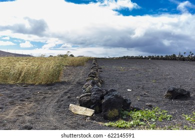 Cultivated farm field on black volcanic land in Canary Islands
