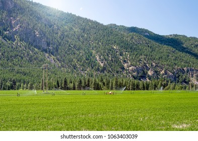 Cultivated Field with a Wheel Line Irrigation System at the Foot of a Wooded Mountain on a Sunny Sumer Day. British Columbia, Canda.