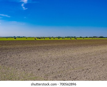 Cultivated land in Beemster Polder, the Netherlands