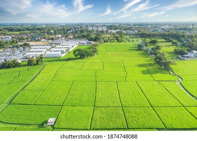 Cultivated land and land plot or land lot. Consist of aerial view of green field, agricultural plant and ridge. That is tract of land for cultivate, owned, sale, development, rent, buy or investment. - Shutterstock ID 1874748088