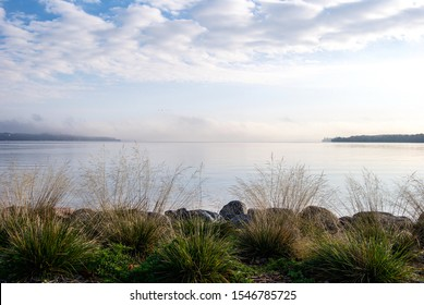 Cultivated plants and grasses overlooking freshwater lake with mist covered forest in background - Barrie, Ontario