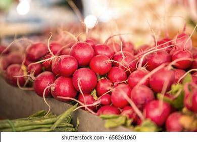 cultivated radish