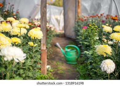 Cultivating flowers in a walk in plastic tunnel in poor conditions in a rural village