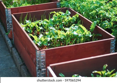 Cultivation box with sallad and herbs