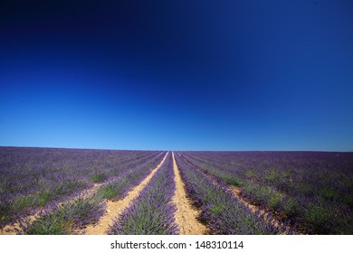 cultivation of lavender perfume provence france