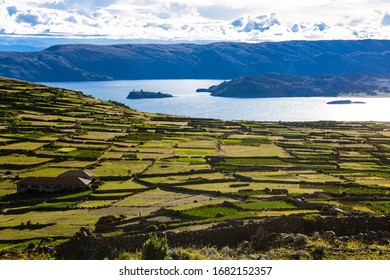 Cultivation spaces and farms in lake titicaca in Peru