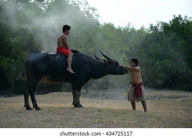 culture of coexistence of the people, and Buffalo, Nakhon Si Thammarat, Thailand.