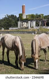 Cumberland Estates Wild Horses