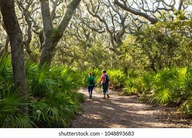 Cumberland Island, Georgia - 2/20/2018:  Two women hikers walk througha Live Oak and spanish moss forest on Cumberland Island, Georgia, with Palmettos in forground.