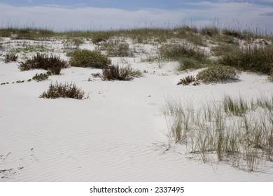 Cumberland Island Natural Sand Dunes