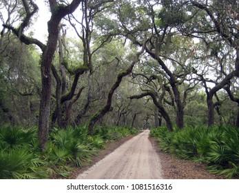 Cumberland Island Path