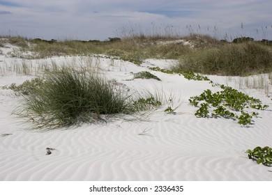 Cumberland Island Sand Dunes