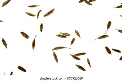cumin seeds on white backgr?und -  zira