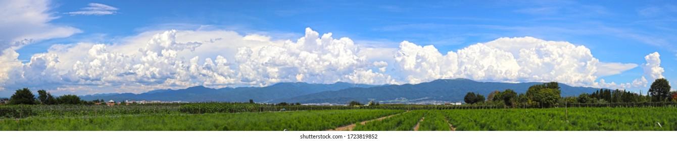 Cumulonimbus clouds and fields under the blue sky
