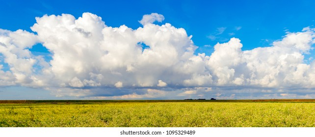 Cumulus clouds in a bright blue sky above a yellow flowering colza field in the Netherlands. In the background is an embankment to close the polder from the water of the sea arm behind it.