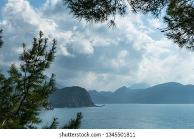 Cumulus clouds in the sky over the Adriatic sea and mountains. Pine trees in the foreground. Soft focus and blurred background.