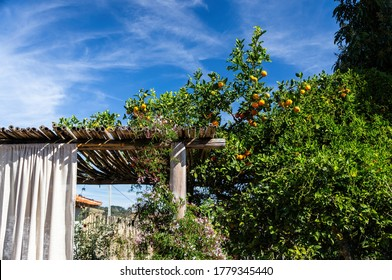 CUNHA, SAO PAULO / BRAZIL - AUG 16, 2019: A tree with green leaves and fresh tangerines cultivated nearby the outdoor area of Casa da Serra restaurant close to a wooden structure of the place.