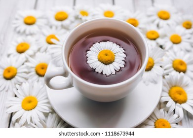 Cup of beauty chamomile tea with fresh daisies. White fresh flowers on a light gray vintage wooden background. Concept, top view.