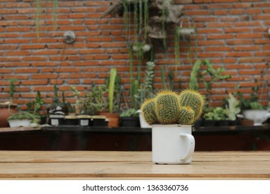 A cup of cantus with succulent plant as background. Taken in Batu city, East Java, Indonesia. March 2019.