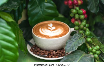 Cup of coffee and coffee beans in burlap sack on coffee tree background.