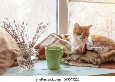 Cup of coffee, books, branch of willow tree, wool blanket and red-white cat on windowsill. In the background snow tree pattern on window. Cozy home concept