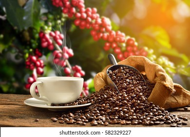 Cup of coffee with smoke and coffee beans in burlap sack on coffee tree background - Shutterstock ID 582329227