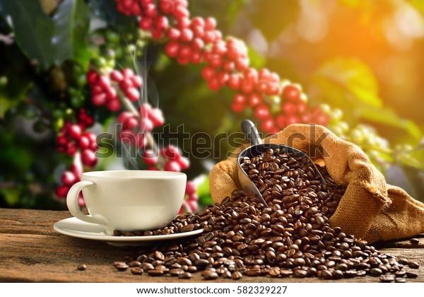 Kahvikuppi savua ja kahvipapuja säkkikangas kahvipuun taustalla
