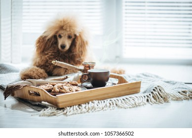 Cup with coffee, turk and cookie on wooden serving tray. Still life details in home interior of living room. Dog resting on the floor.