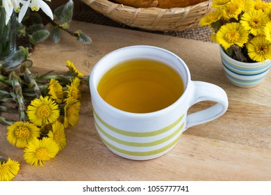 A cup of coltsfoot (Tussilago farfara) tea with fresh coltsfoot flowers on a wooden tabe