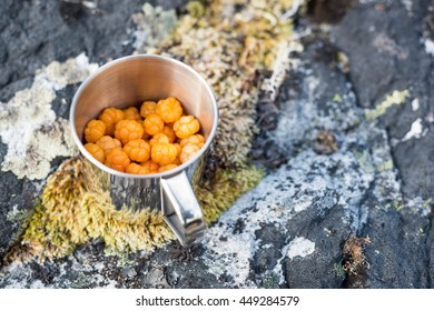 Cup of delicious cloudberries.