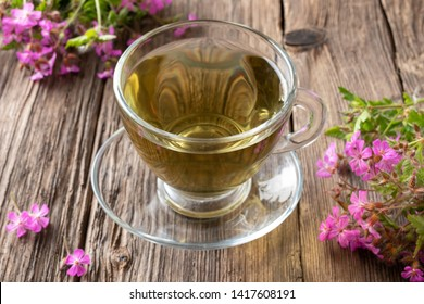 A cup of herbal tea with fresh blooming herb-Robert plant
