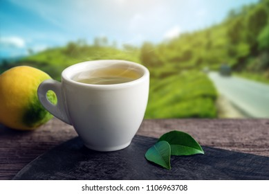 Cup of hot green tea with a piece of lemon on the table on the background of plantations. Concept tea beverage industry