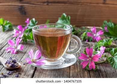 A cup of mallow tea with fresh blooming malva sylvestris plant