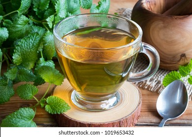 A cup of melissa (lemon balm) tea on a table with fresh melissa leaves in the background