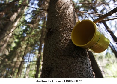 cup on the tree near clean stream of water
