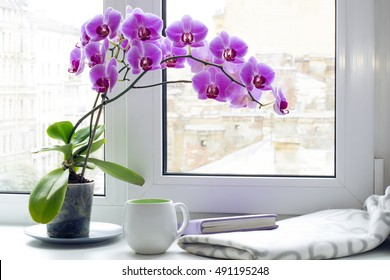 cup, plaid, book and orchid on window sill