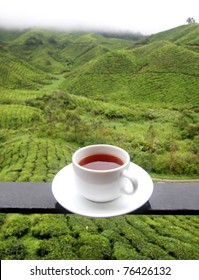 Cup of tea background of tea plantations